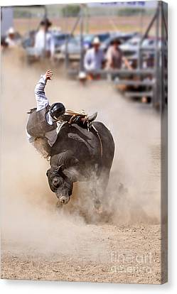 Bull Riding Canvas Print by Delphimages Photo Creations