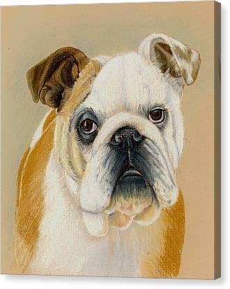 Bulldog Canvas Print by Ruth Seal