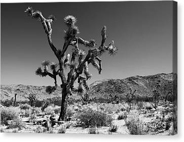 Bullet The Blue Sky - Joshua Tree N.p Canvas Print by Henk Meijer Photography