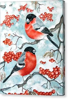 Bullfinch Couple Canvas Print