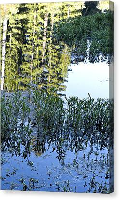 Bullfrog Pond Reflection Canvas Print