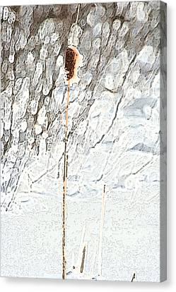 Bulrush In Snow Canvas Print by Carolyn Reinhart