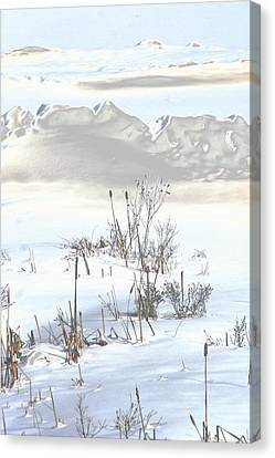 Bulrushes In Snow Canvas Print by Carolyn Reinhart