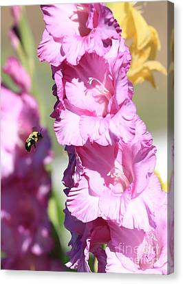 Bumble Bee In The Gladiolus Canvas Print