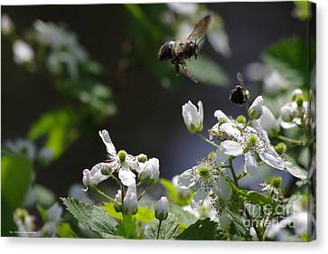 Canvas Print - Bumble Bees In Flilght by Tannis  Baldwin