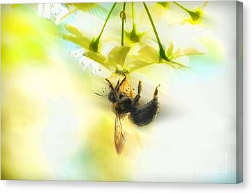 Bumble Going In For The Nectar Canvas Print by Dan Friend