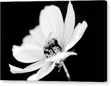 Workings Canvas Print - Bumblebee Collect Pollen  by Tommytechno Sweden