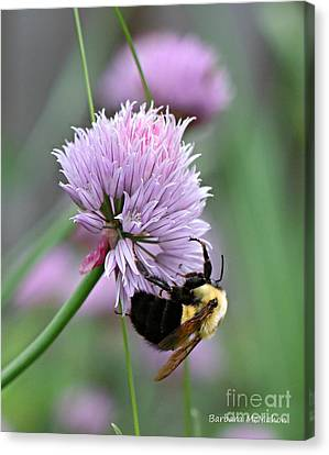 Canvas Print featuring the photograph Bumblebee On Clover by Barbara McMahon