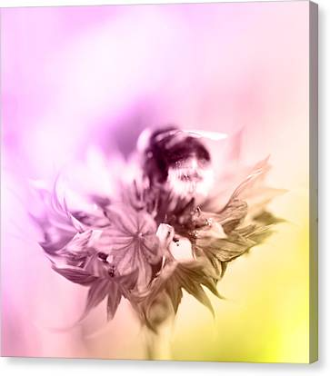 Workings Canvas Print - Bumblebee On Flower  by Tommytechno Sweden