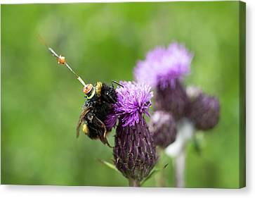 Bumblebee Radar Tagging Canvas Print