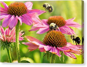 Bumbling Bees Canvas Print by Bill Pevlor