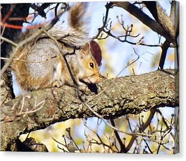 Bushy Tail Canvas Print - Bumpy The Squirrel by Robyn King