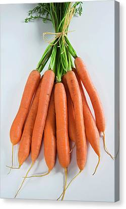 Bunch Of Carrots (daucus Carota Canvas Print by Nico Tondini
