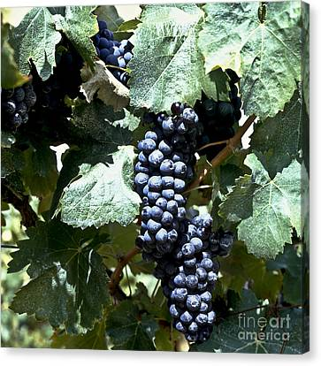Bunch Of Grapes Canvas Print by Heiko Koehrer-Wagner