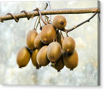 Bunch Of Kiwi Canvas Print by Sinisa Botas