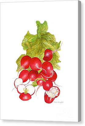 Bunch Of Radishes Canvas Print