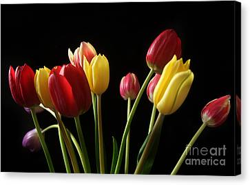 Bunch Of Tulips Canvas Print by Eden Baed