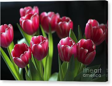 Bunch Of Tulips Canvas Print by Sharon Talson