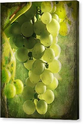 Bunch Of Yellow Grapes Canvas Print by Barbara Orenya
