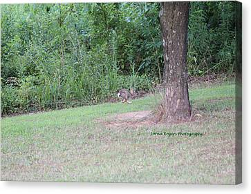 Canvas Print featuring the photograph Bunny Hop by Lorna Rogers Photography