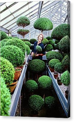 Bunny Mellon In Her Greenhouse Canvas Print