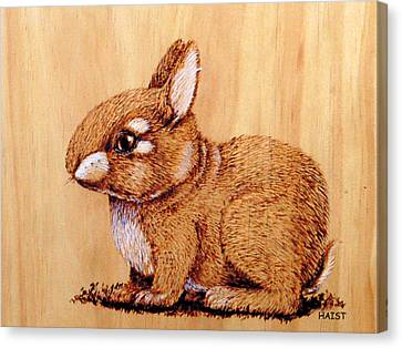 Bunny Canvas Print by Ron Haist