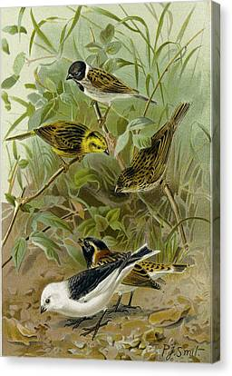 Bunting Canvas Print - Buntings by English School