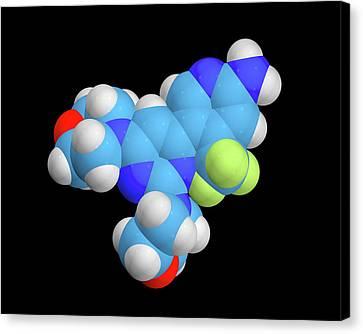 Buparlisib Experimental Drug Molecule Canvas Print by Dr Tim Evans