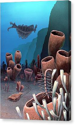 Burgess Shale Canvas Print