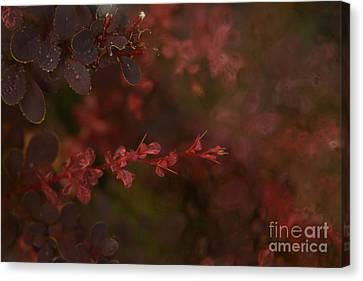 Burgundy Branch Canvas Print by Jennifer Apffel