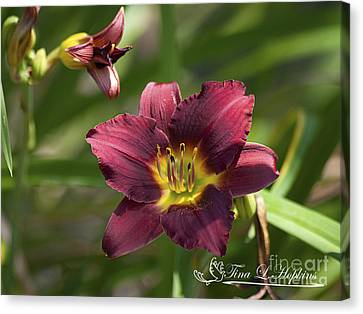 Burgundy Day Lily 20120706_24 Canvas Print