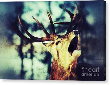 Canvas Print featuring the photograph Burling Deer by Nick  Biemans
