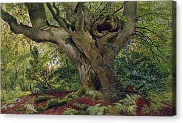 Burnham Beeches Canvas Print by James Matthews