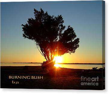 Canvas Print featuring the photograph Burning Bush by Bob Sample