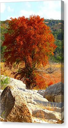Canvas Print featuring the photograph Burning Cypress by David  Norman