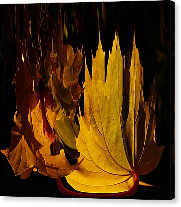 Burning Fall Canvas Print by Jouko Lehto