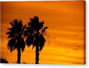 Canvas Print featuring the photograph Burning Palms by Kathy Ponce