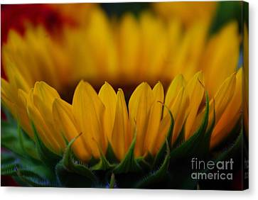 Canvas Print featuring the photograph Burning Ring Of Fire by John S