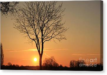 Burning Tree In The Sunrise Canvas Print