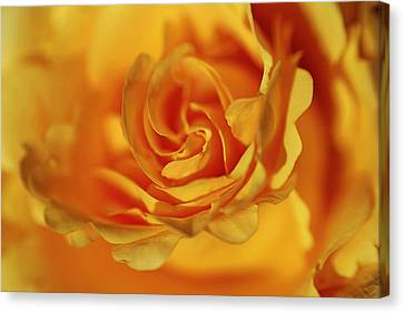 Canvas Print featuring the photograph Burning Yellow by Lorenzo Cassina