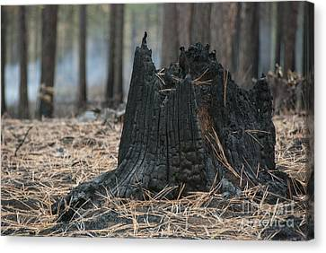 Burnt Tree Trunk Canvas Print by Juli Scalzi