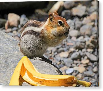 Burp... What Banana ?... Canvas Print by Donna Kennedy