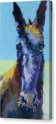 Burro Stare Canvas Print by Diane Whitehead