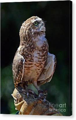 Canvas Print featuring the photograph Burrowing Owl by Debby Pueschel