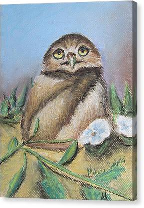 Burrowing Owl Of Cape Coral  Canvas Print