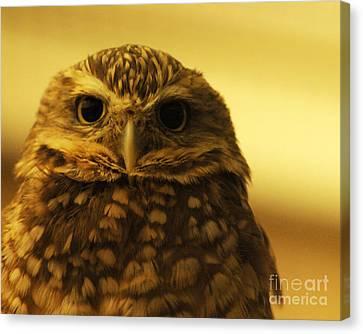 Burrowing Owl Canvas Print by Olivia Hardwicke