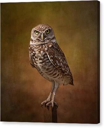 Burrowing Owl Portrait Canvas Print by Kim Hojnacki