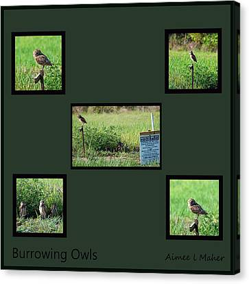 Burrowing Owls Canvas Print by Aimee L Maher Photography and Art Visit ALMGallerydotcom