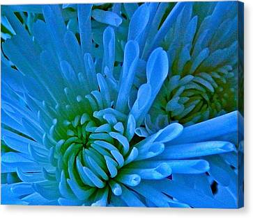 Burst Of Blue Canvas Print