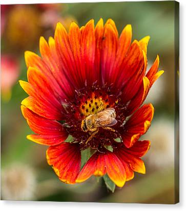 Canvas Print featuring the photograph Burst Of Color by Kathleen Scanlan